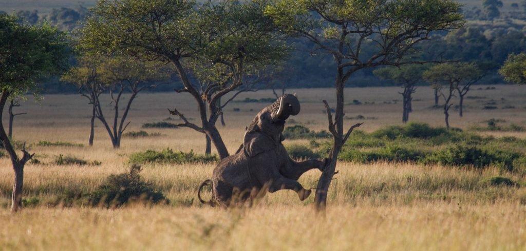 Safari Investment